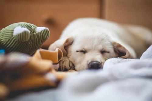 睡眠薬の口コミ・体験談・評判