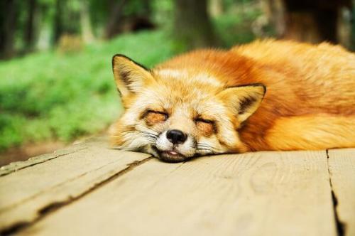 良い睡眠のためにはまずは環境の改善を(まとめ)
